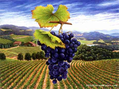 grape wine landscape Stock Image